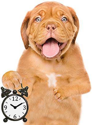 Puppy met klok.