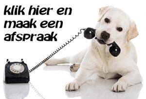 Labrador met telefoon.
